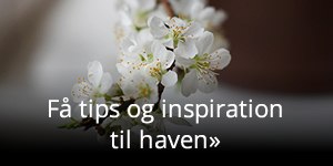 Haveinspiration