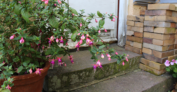 Fuchsia ved trappe
